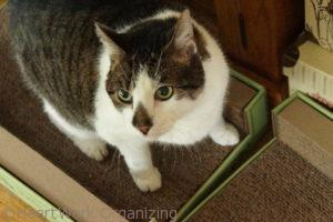 organized cats - Smudge
