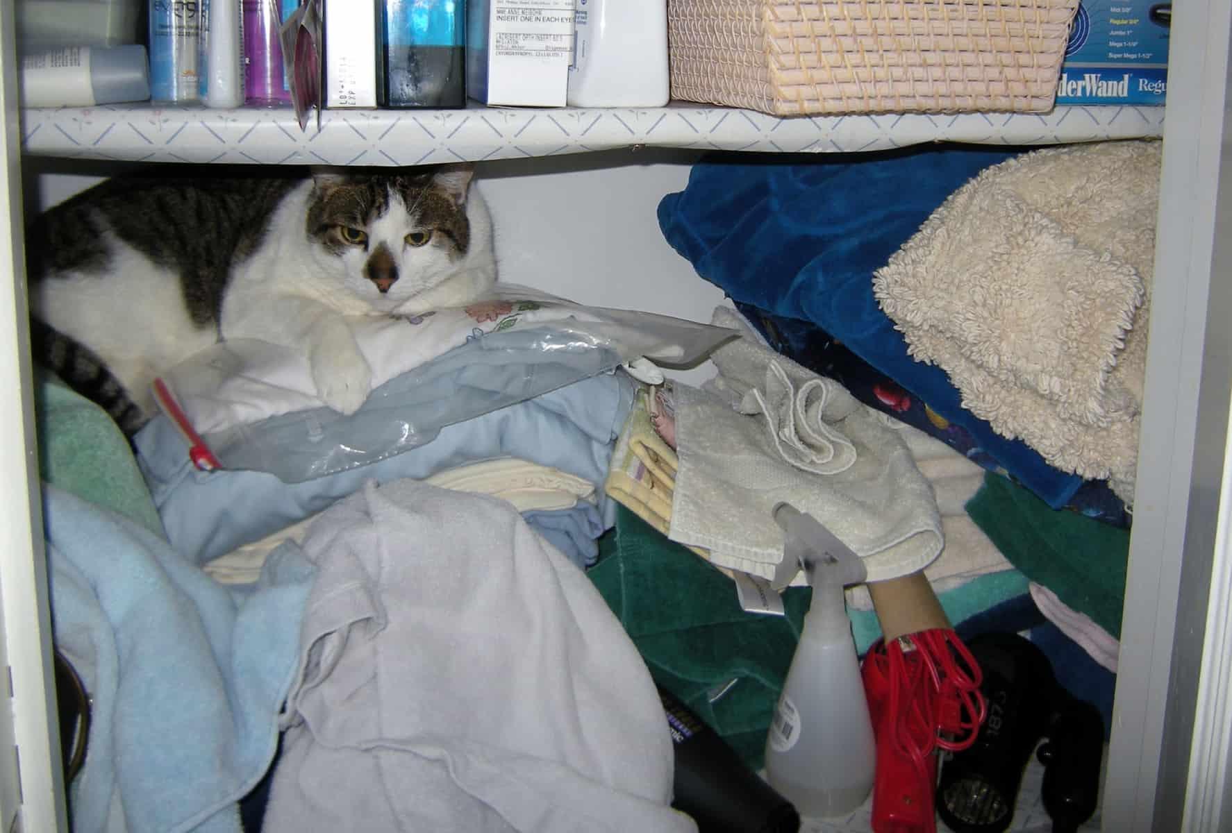 Smudge Helping Me Organize A Linen Closet