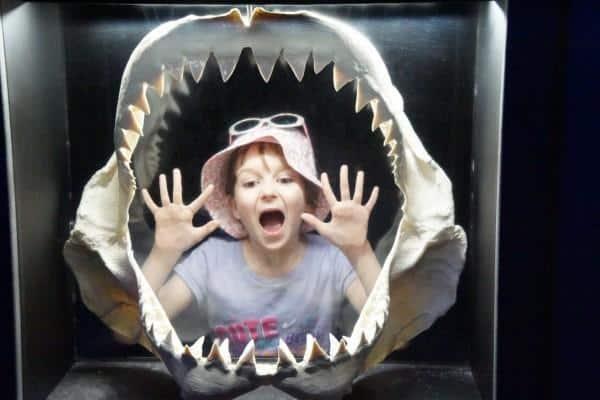 SeaWorld sharks