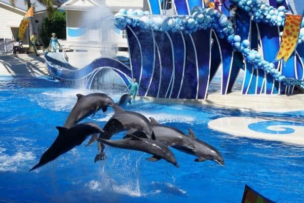 SeaWorld Orlando Dolphin Show