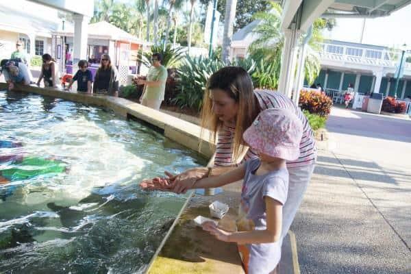 SeaWorld Stingrays