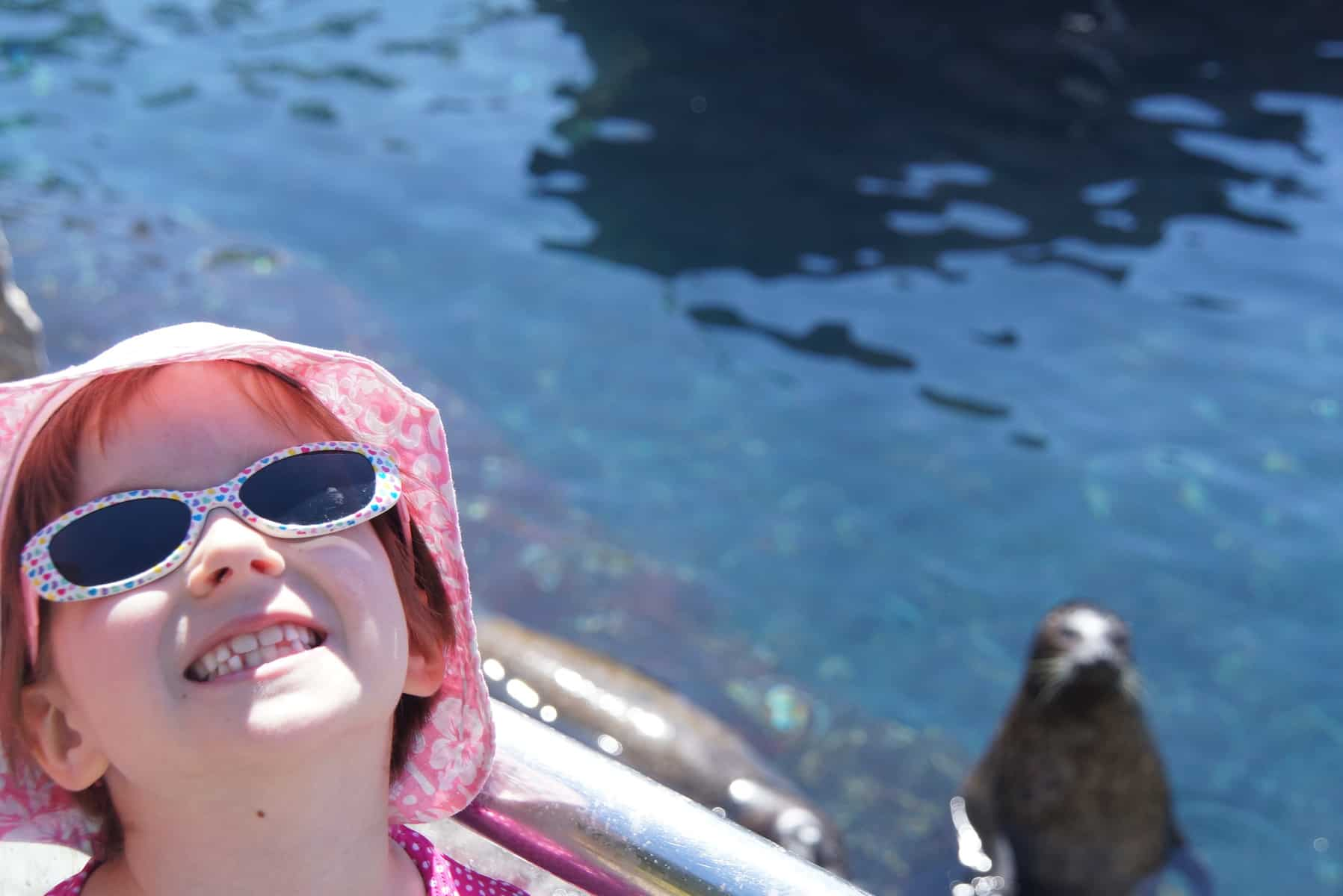 SeaWorld Seals