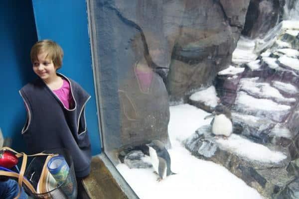 SeaWorld Baby penguin