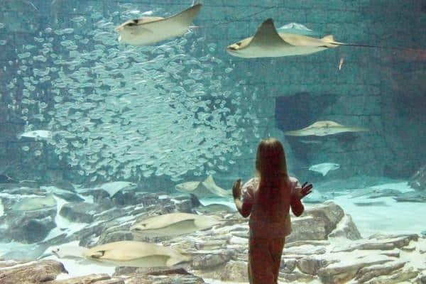 SeaWold Stingray aquarium