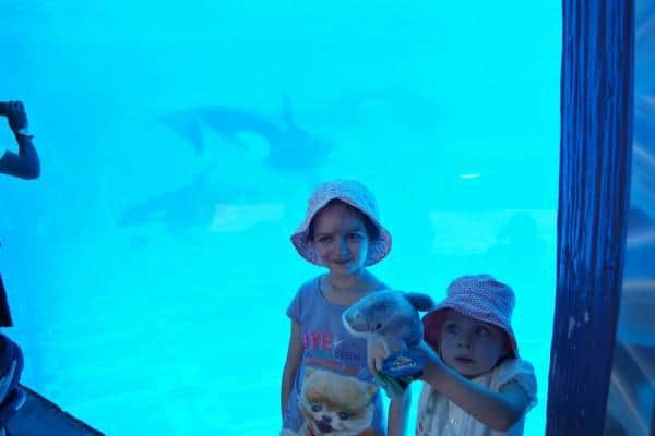 SeaWorld Orlando Whales