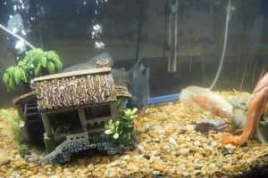 fish tanks without power