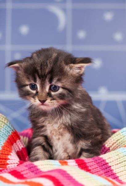 Жалобный котенок картинки