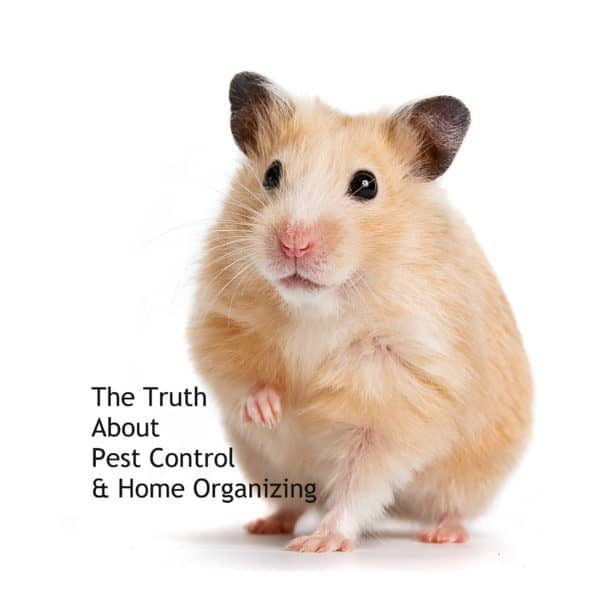 organizing to keep your home pest free
