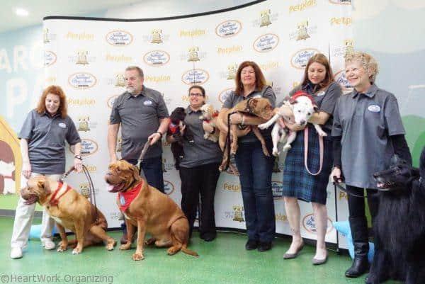 national-dog-show-38