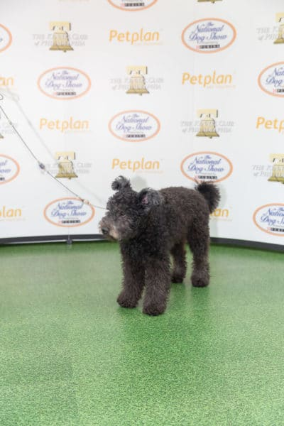 national-dog-show