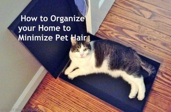 How to Organize your Home to Minimize Pet Hair