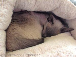 kitty staying warm