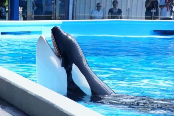 SeaWorld Orlando Shamu