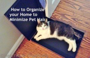 Read more about the article How to Organize your Home to Minimize Pet Hair