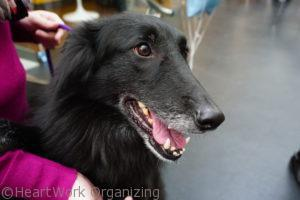 Read more about the article Do Dogs Make You Happy?