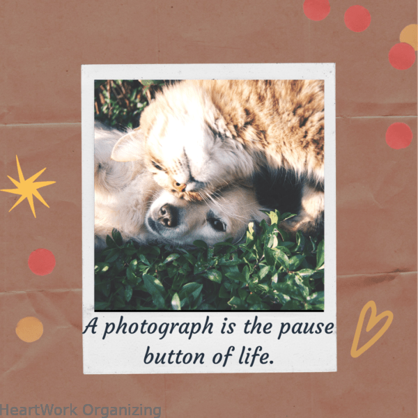 A photograph is the pause button of life