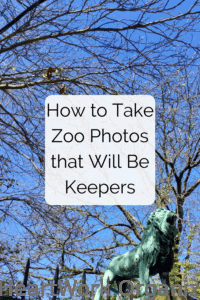 Read more about the article How to Take Zoo Photos that Will Be Keepers