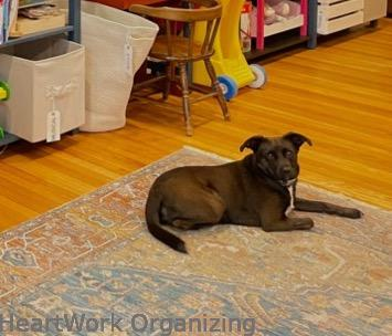 How to Organize a Small Home Without a Closet- Daisy dog